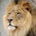 leo's picture